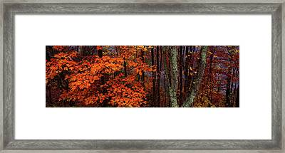 View Of Trees In Forest, Great Smoky Framed Print by Panoramic Images