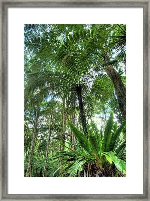 View Of Vegetation In Bali Botanical Framed Print