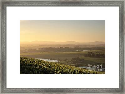 View Over Vines Framed Print by Neil Overy