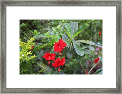Viewpoint - Phi Phi Island - 01135 Framed Print