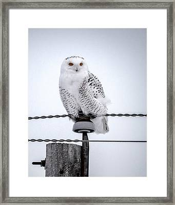 Vigilant Framed Print by David Wynia