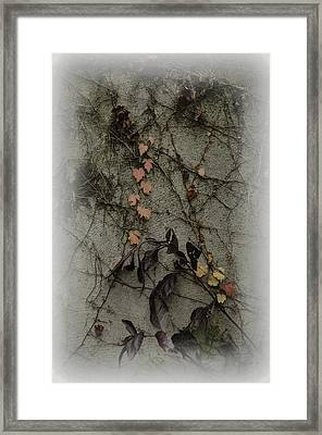 Vignes D'automne Framed Print