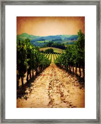 Vigneto Toscana Framed Print by Micki Findlay