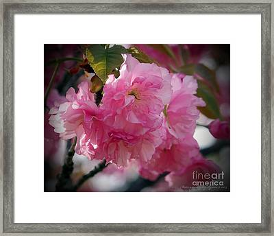 Framed Print featuring the photograph Vignette Cherry Blossom by Gena Weiser