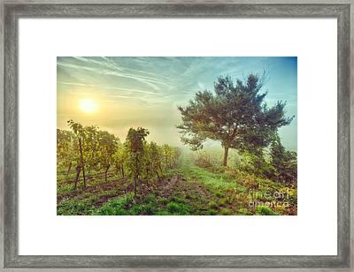Vignoble Alsacien Framed Print by JOCKERS Nadine