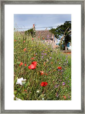 Village Life Framed Print by Paul Lilley