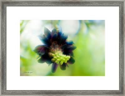 Framed Print featuring the photograph Vine 1 by Travis Burgess