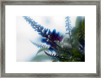 Framed Print featuring the photograph Vine 2 by Travis Burgess