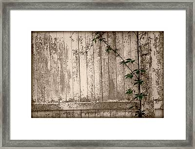 Framed Print featuring the photograph Vine And Fence by Amanda Vouglas