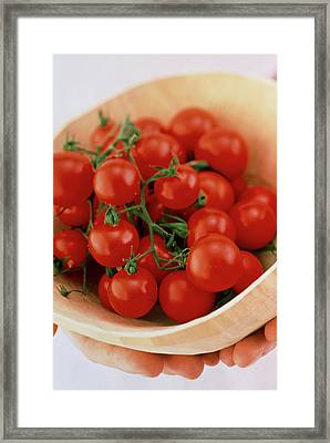 Vine Cherry Tomatoes Framed Print by William Lingwood/science Photo Library