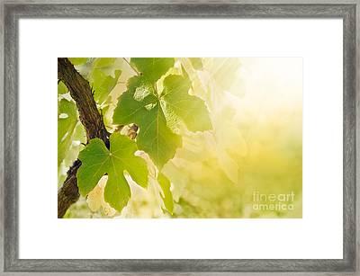 Vine Leaf Framed Print by Mythja  Photography