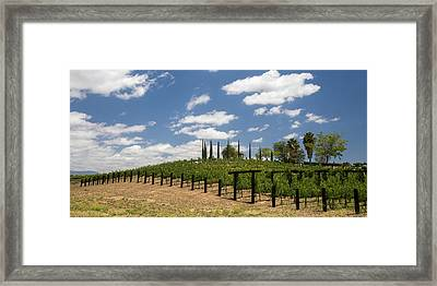 Vine No Hollywood Framed Print by Peter Tellone