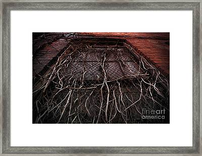 Vine Of Decay 1 Framed Print by Amy Cicconi