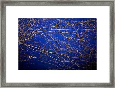 Vine On Blue Wall Framed Print by Dave Garner