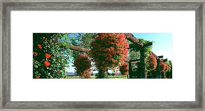 Vine Roses And Potted Geraniums Add Framed Print by Panoramic Images