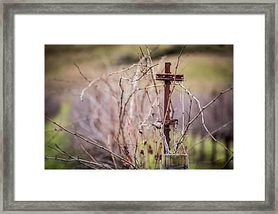 Vinepost Framed Print by Mike Lee