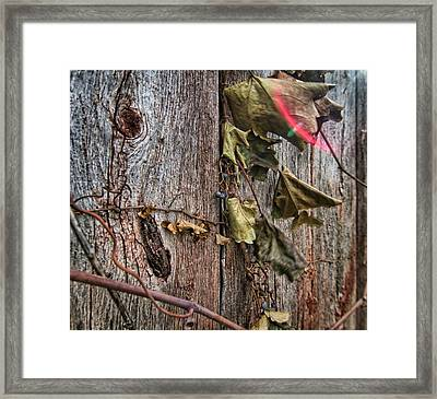 Vines And Barns Framed Print