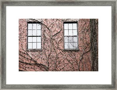 Vines And Brick Framed Print