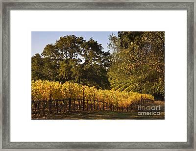 Vines And Oaks Alexander Valley Framed Print