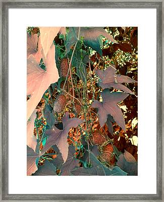 Vines And Things Framed Print by Joanne Smoley