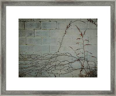 Vines Framed Print by Carl Engman