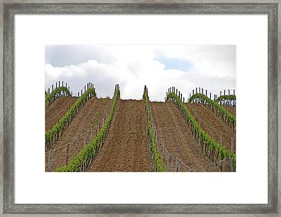 Vines Flow Over The Landscape Framed Print