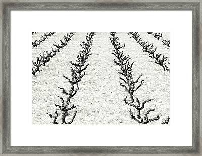 Vines Framed Print by Frank Tschakert