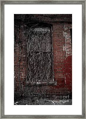 Vines Of Decay Framed Print by Amy Cicconi