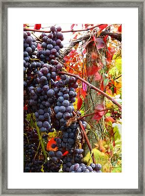 Vines Of October Framed Print