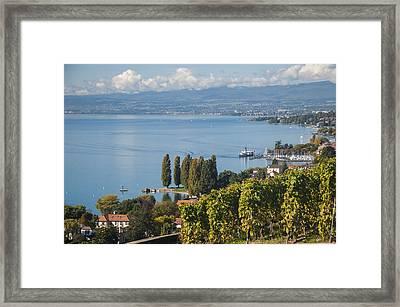 Vines Over Lake Geneva Framed Print