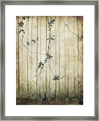 Vines Framed Print