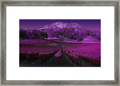 Vineyard 41 Framed Print