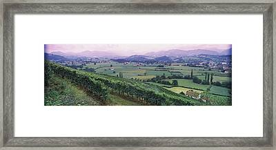 Vineyard Above Saint-jean-pied-de-port Framed Print by Panoramic Images
