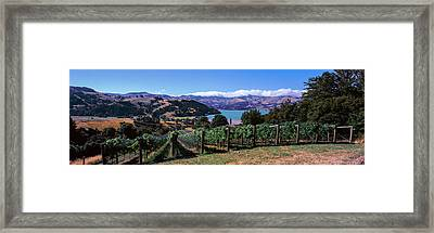 Vineyard, Akaroa Harbour, Banks Framed Print