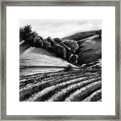 Vineyard Framed Print by Allison Rogers