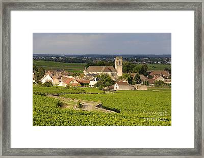 Vineyard And Village Of Pommard. Cote D'or. Route Des Grands Crus. Burgundy. France. Europe Framed Print