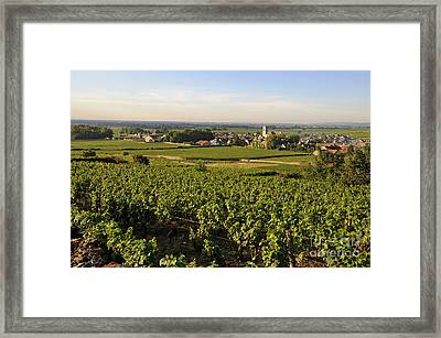 Vineyard And Village Of Pommard. Cote D'or. Route Des Grands Crus. Burgundy.france. Europe Framed Print by Bernard Jaubert