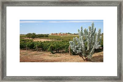 Vineyard And Winery Framed Print by Carl Koenig