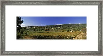 Vineyard At Saint-saturnin-les-apt Framed Print