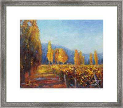 Vineyard Autumn Framed Print by Carolyn Jarvis