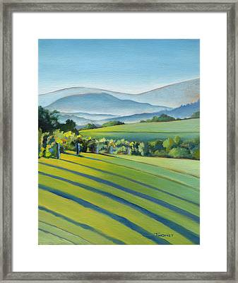 Vineyard Blue Ridge On Buck Mountain Road Virginia Framed Print by Catherine Twomey