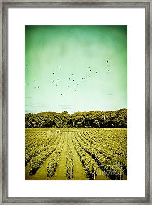 Vineyard Framed Print by Colleen Kammerer