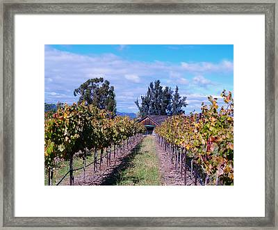 Livermore - Vineyard Barn Framed Print