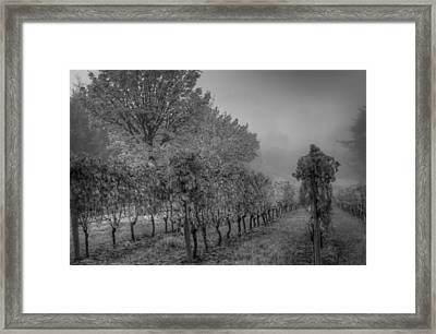 Vineyard Fog Framed Print