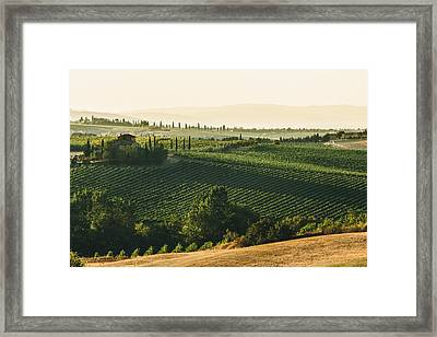 Vineyard From Above Framed Print
