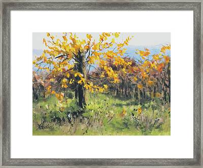 Vineyard Gold Framed Print by Karen Ilari