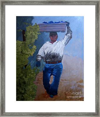 Vineyard Harvest I Framed Print by Donna Schaffer
