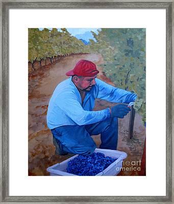 Vineyard Harvest Iv Framed Print by Donna Schaffer