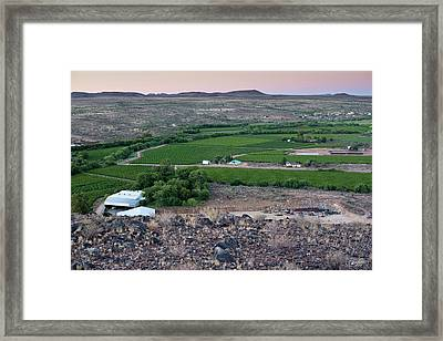 Vineyard In Arid Terrain Framed Print by Tony Camacho