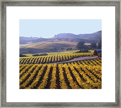 6b6386-vineyard In Autumn Framed Print